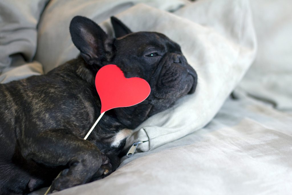 CEWE fotolab blog, Valentín