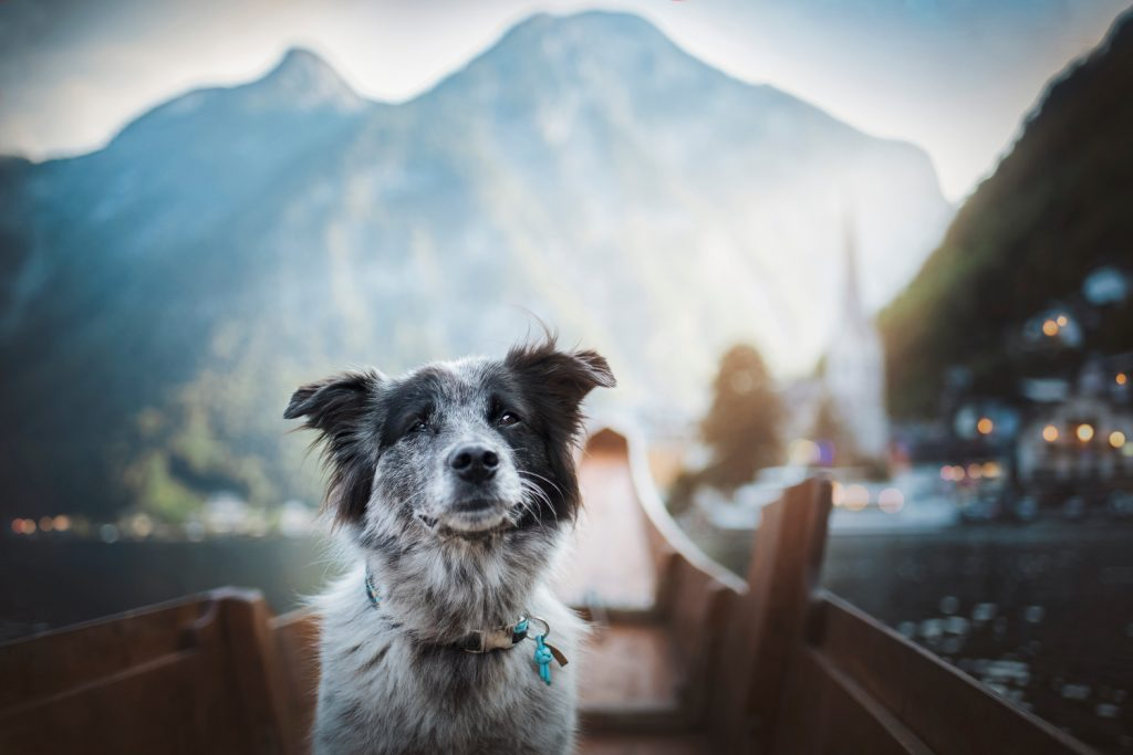 CEWE dog travel, cestovanie fotenie pes