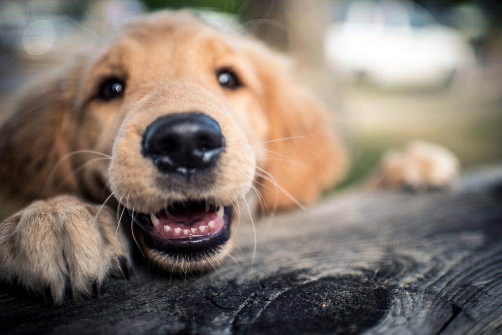 fotenie psa, CEWE