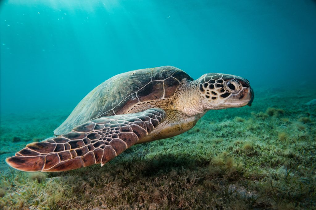 fotenie pod vodou